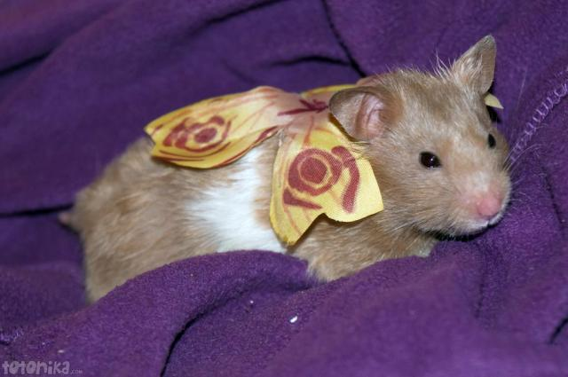 Fairy hamster with wings