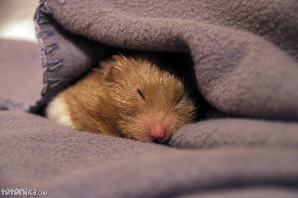 Baby hamster sleeping on my hand - YouTube  Cute Baby Hamsters Sleeping